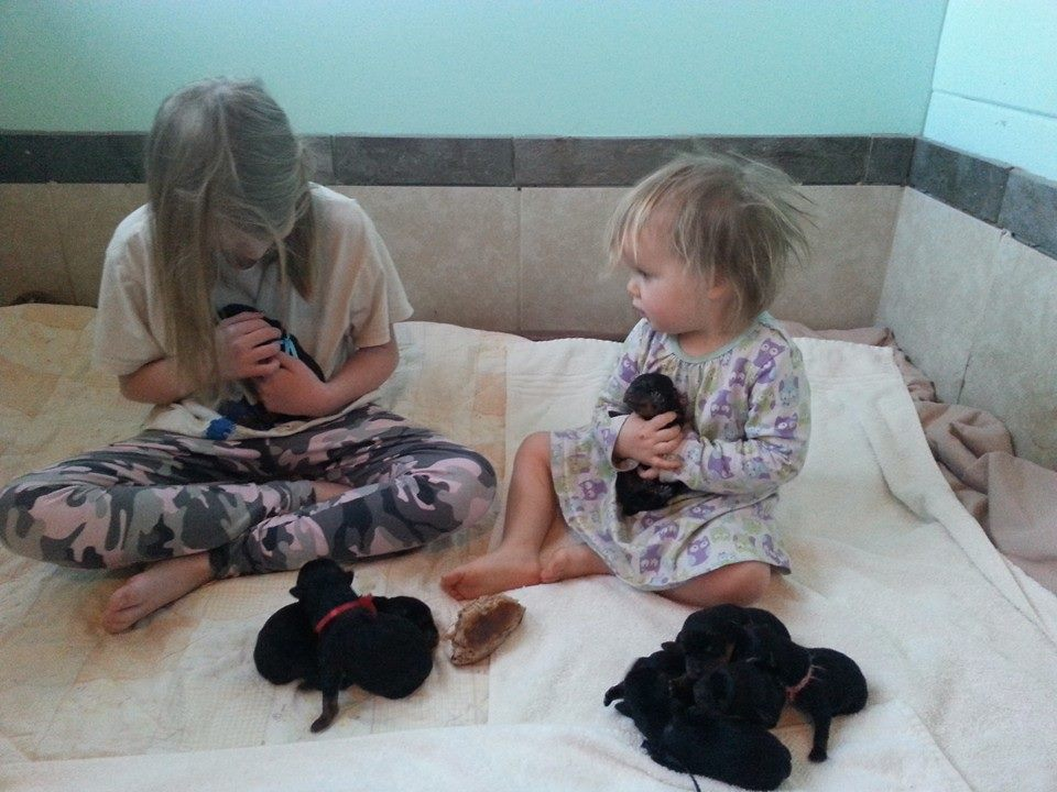 My girls with Mercedes X Indio puppies.
