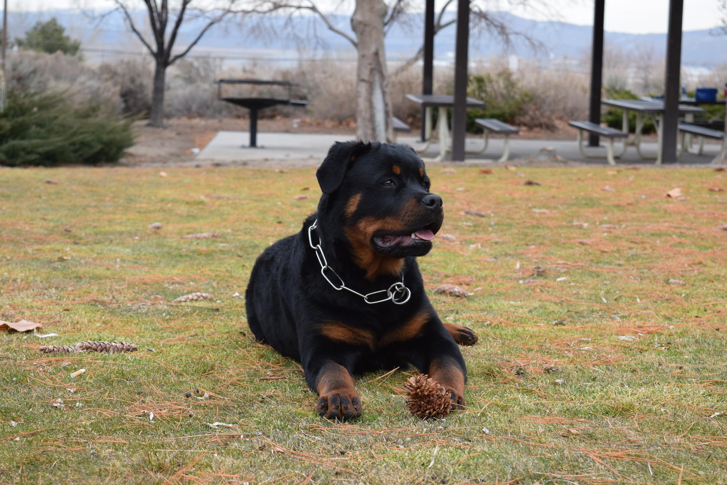 Kaiser at 6 months