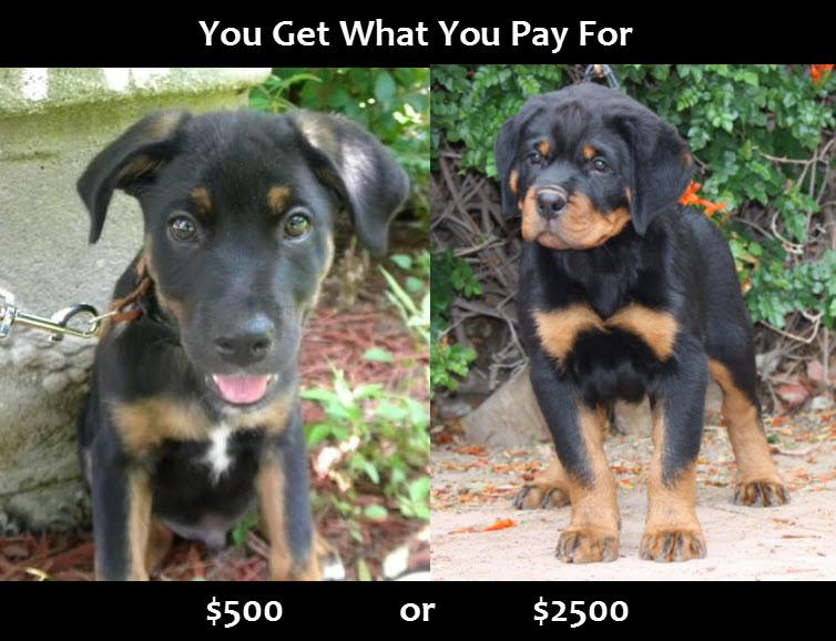 Graphic by Michael Burns. A Hause Burns puppy is pictured on the right.
