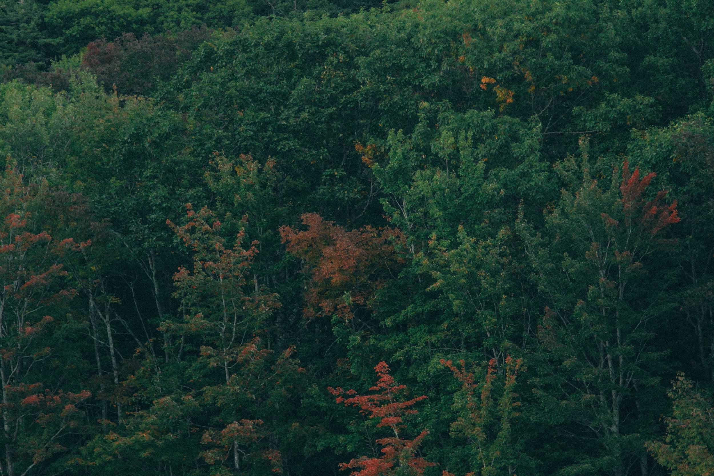 Camden Maine.