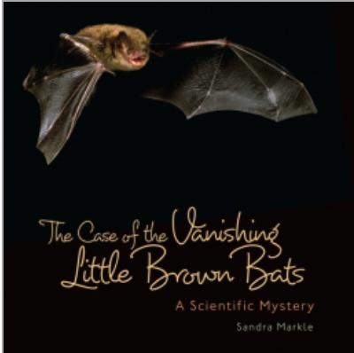 vanishing little brown bat
