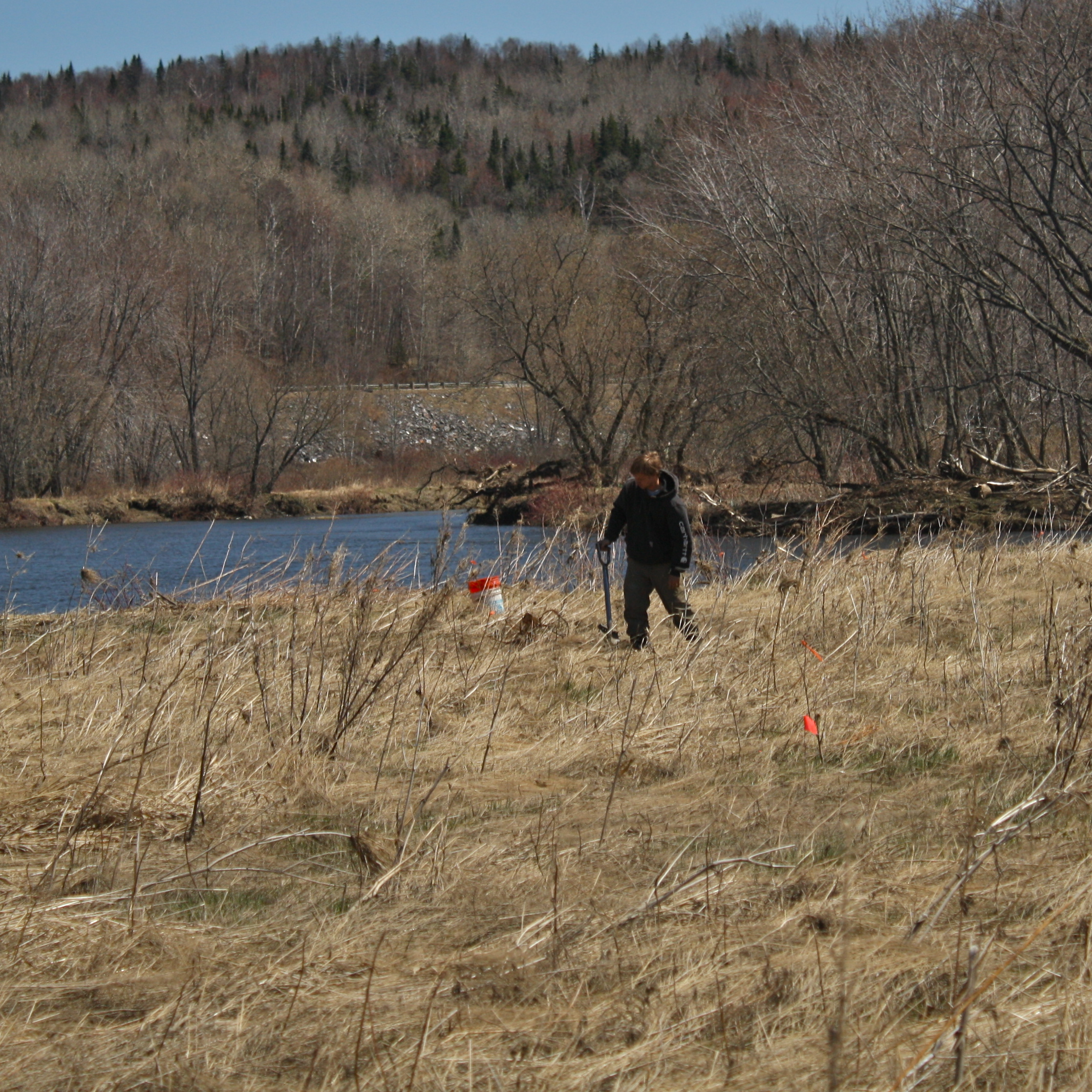 Tree planting in the wetlands buffer
