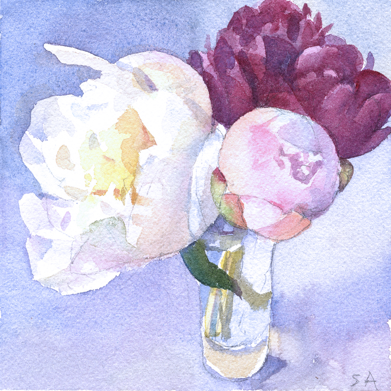 """""""Three Peonies"""", 6"""" x 6"""", watercolor on Arches paper"""