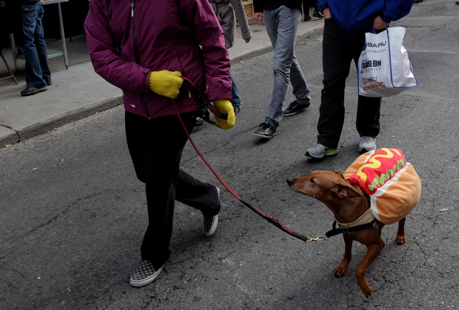 Hot dog dog-100dpi.jpg