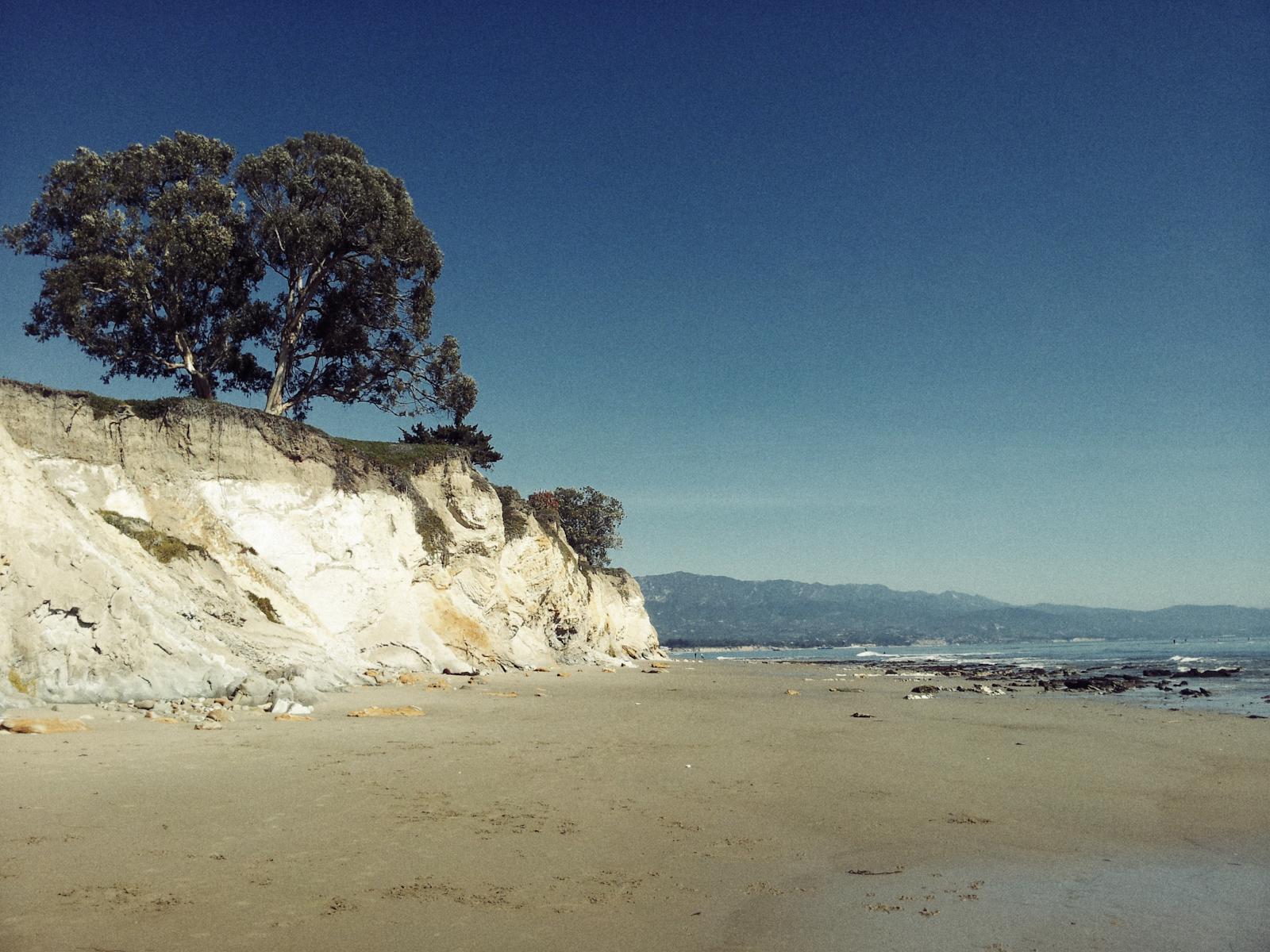 Tree_Beach.jpg