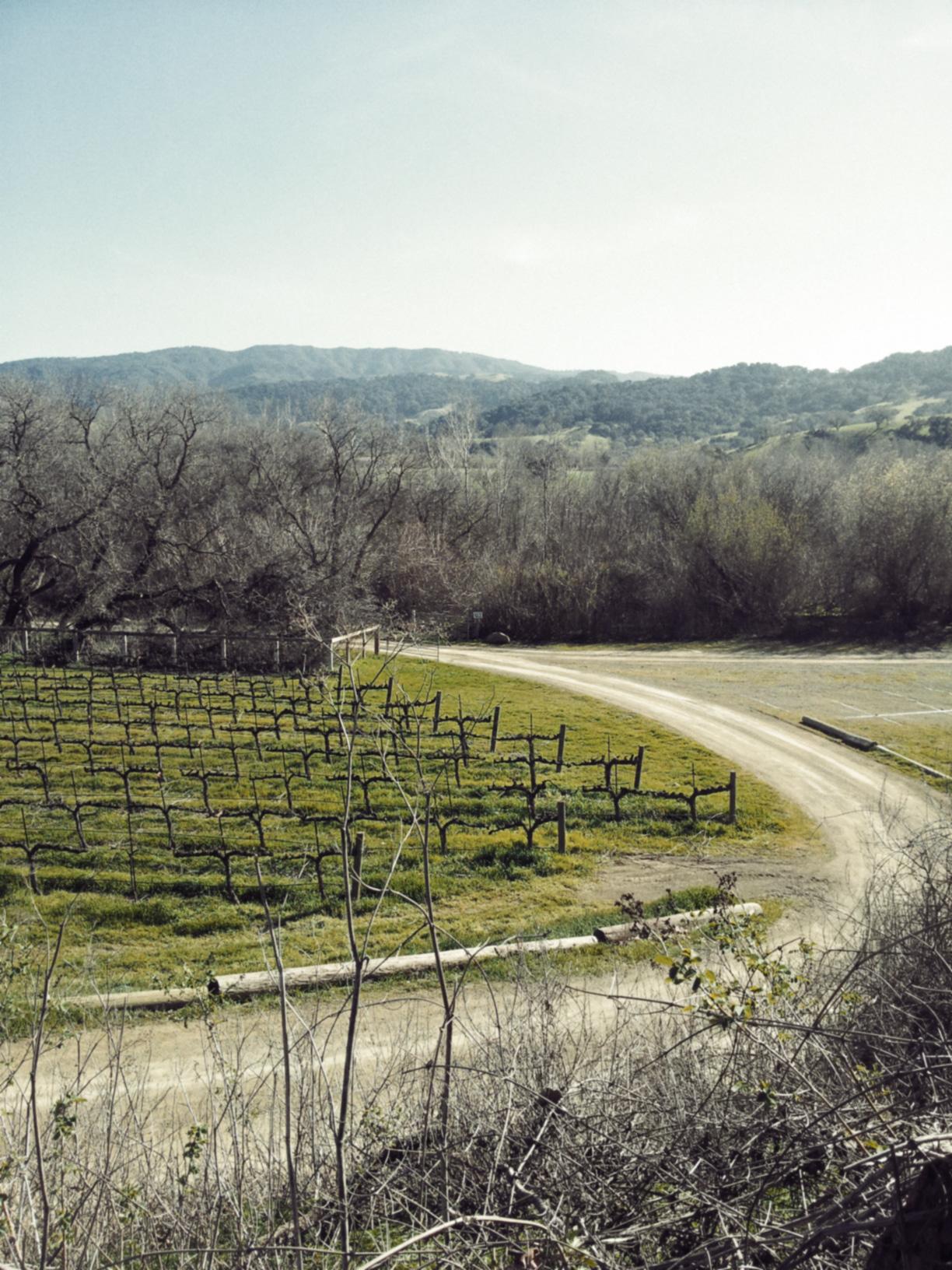 Winery_View.jpg