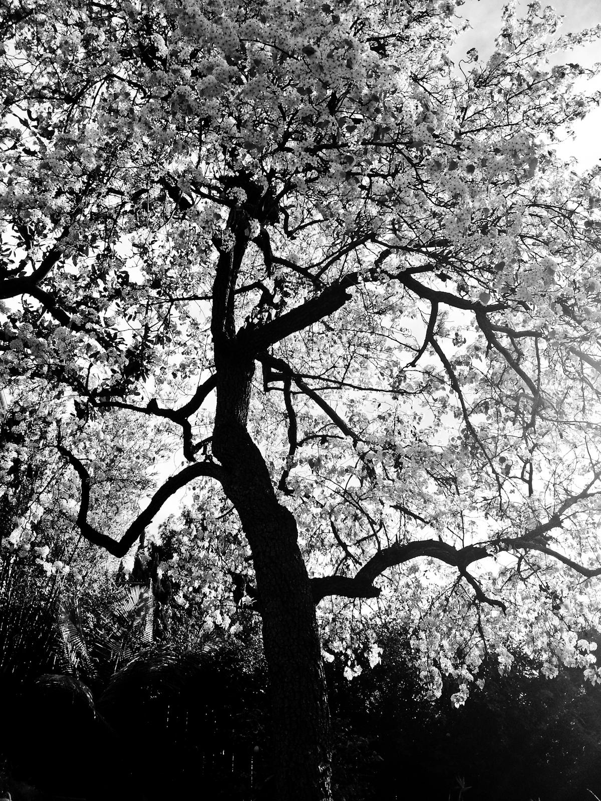 BW_Branches_Flowers.jpg
