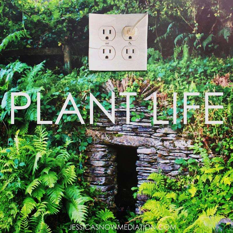 PLANTLIFE.jpg