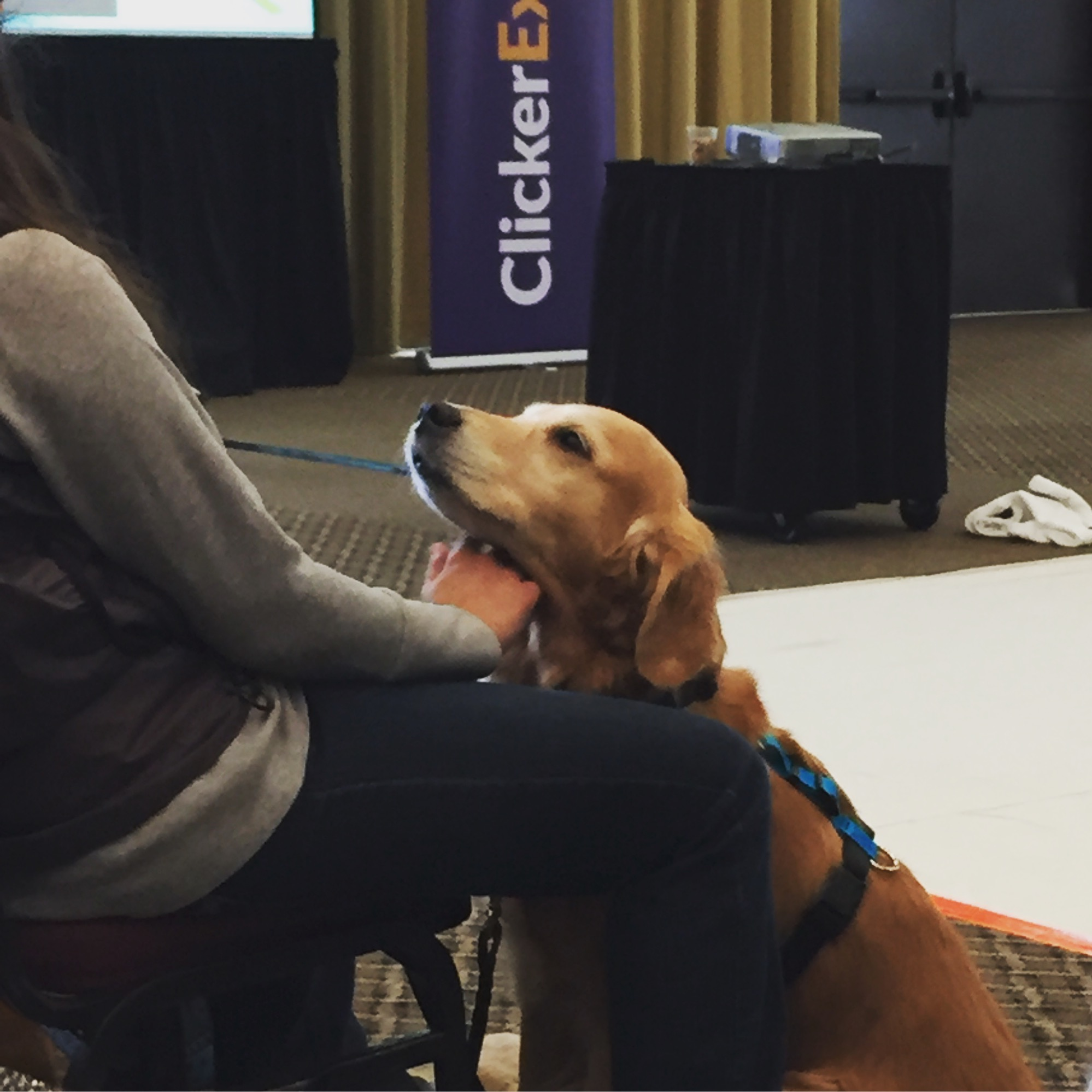 At ClickerExpo in Portland last week