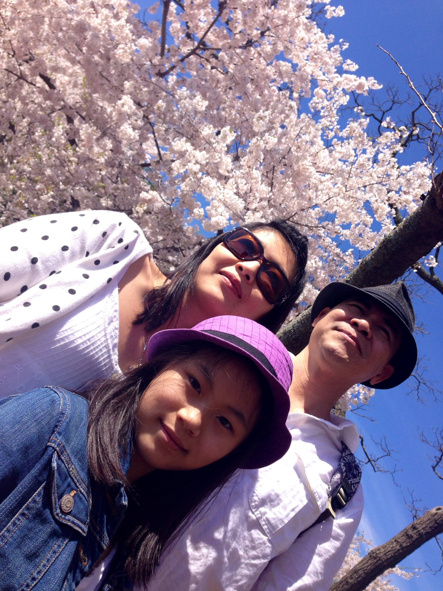 Angela, de 10 anos, com os pais, Thoa e Trieu: família vietnamita admirando a Cherry Blossom