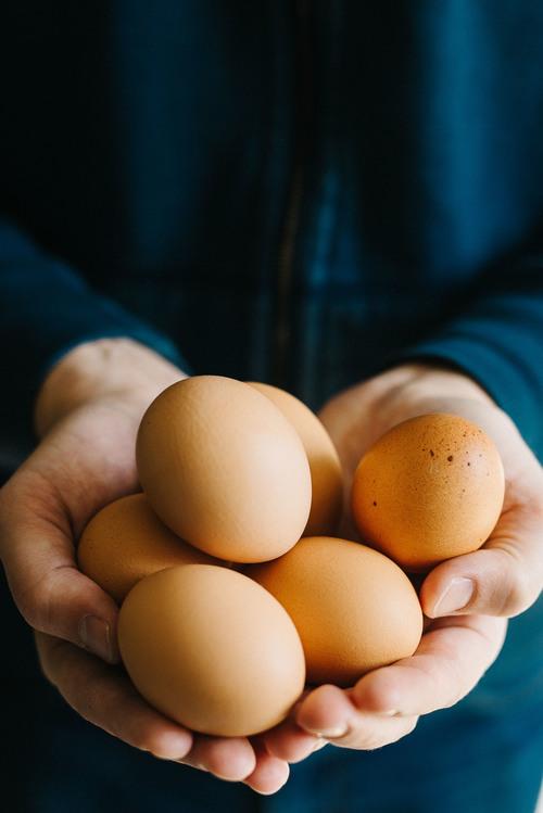 farm eggs | dolly and oatmeal
