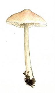 unidentified+mushroom+4.jpg