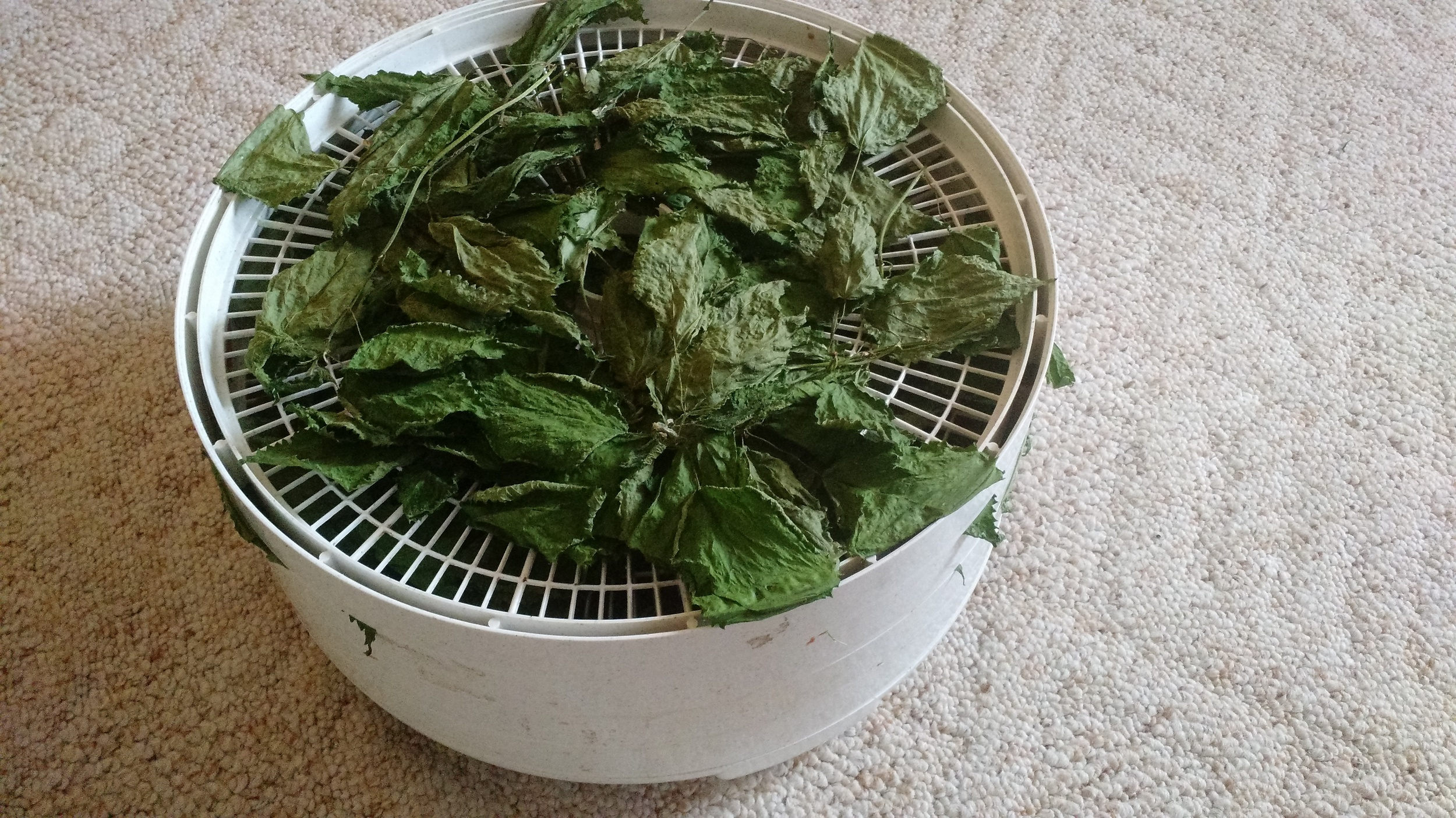 Drying nettles.