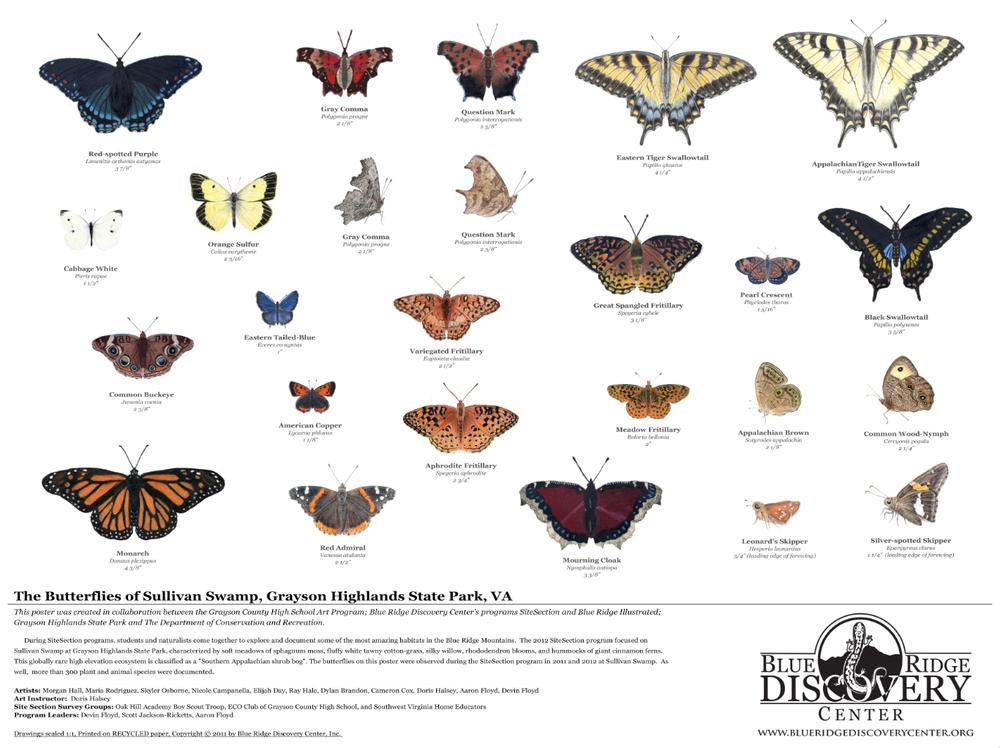 Blue Ridge Illustrated butterflies of sullivan swamp.png