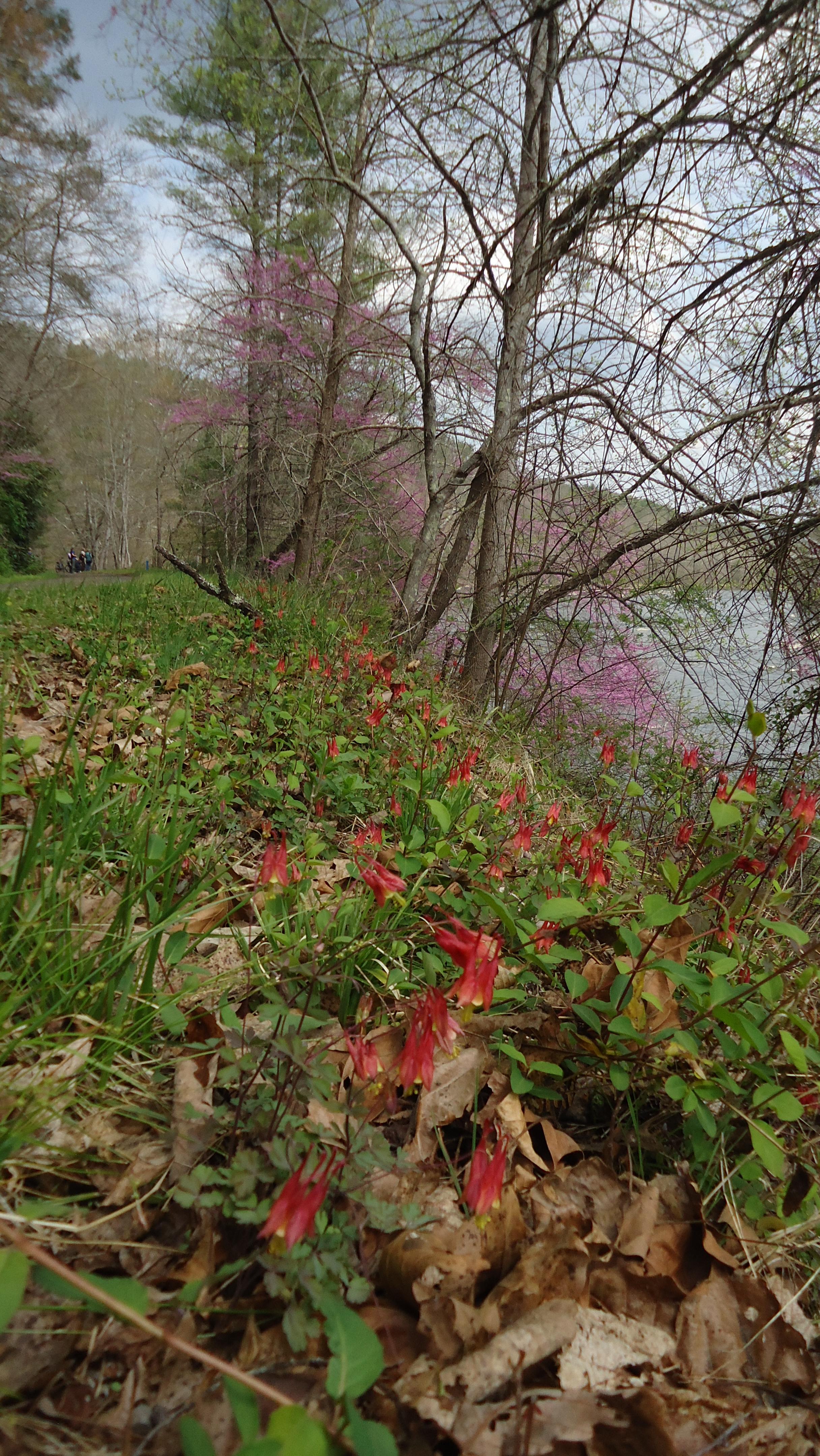wildflower_walk_2017_36.JPG