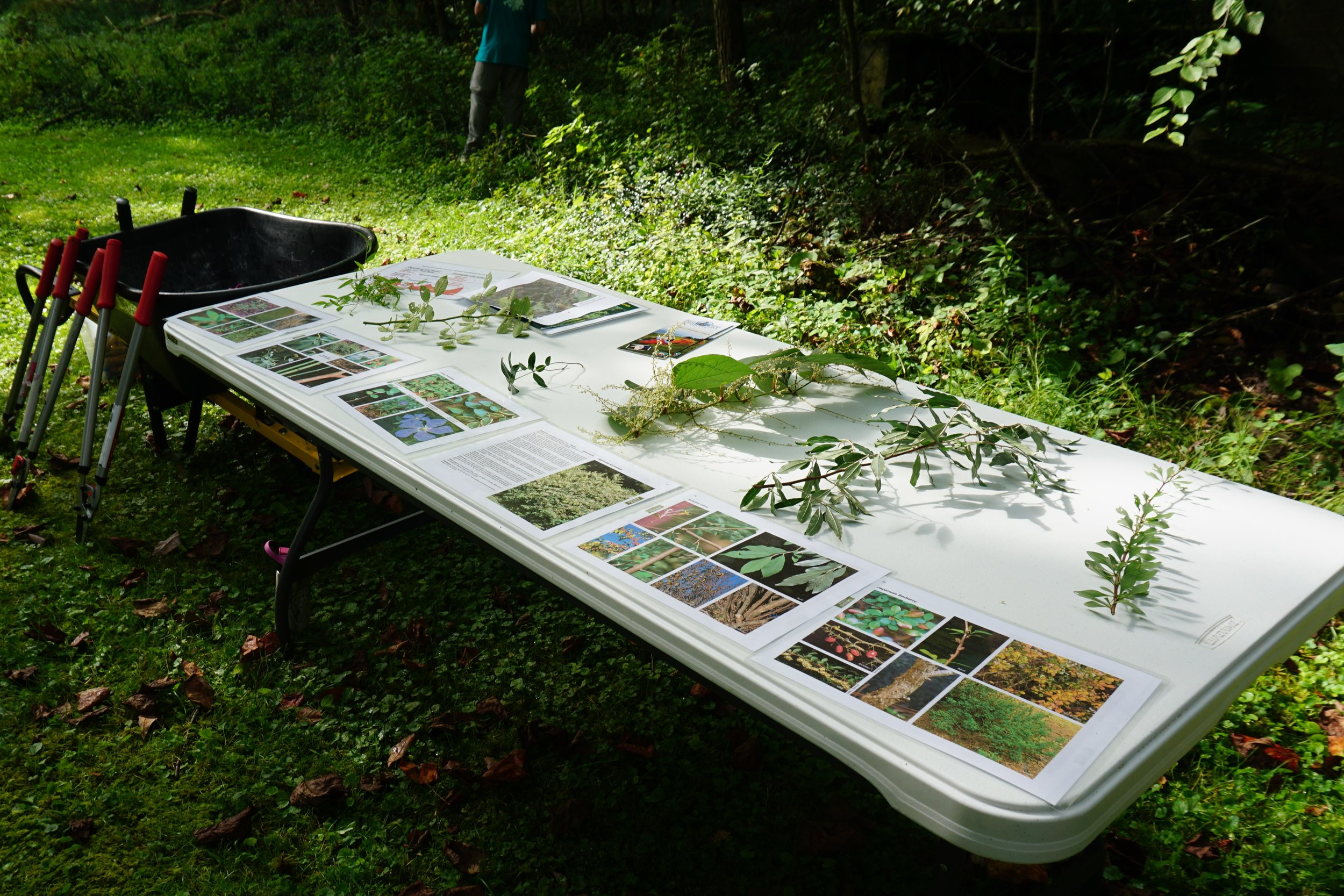 An introduction to non-native, invasive plants