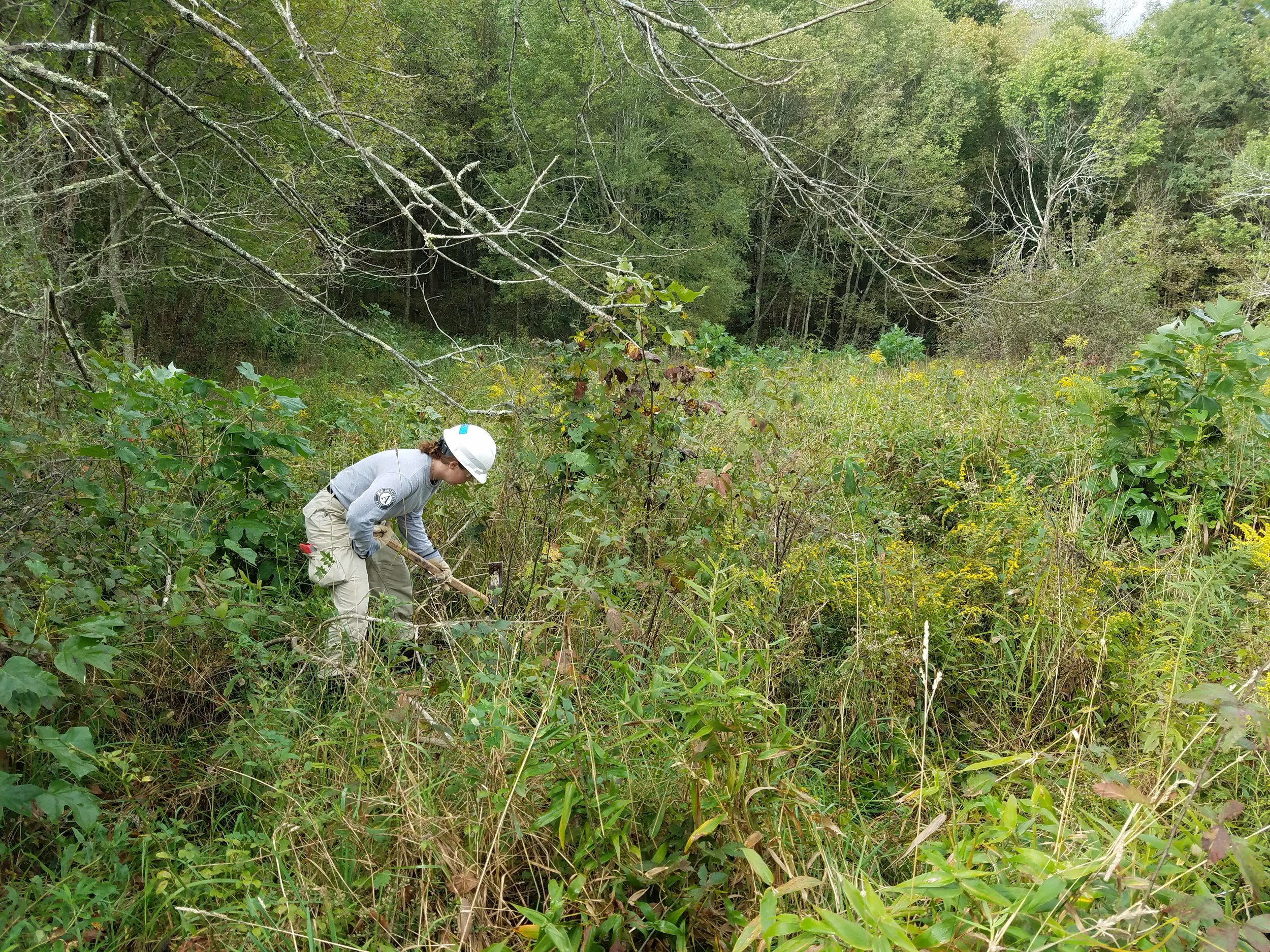 AmeriCorps NCCC member removing non-native multiflora rose from the habitat.