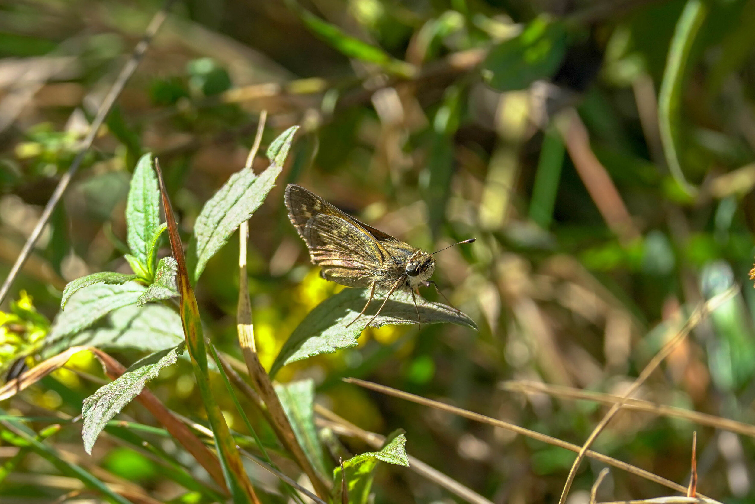 Butterfly Count-3.jpg