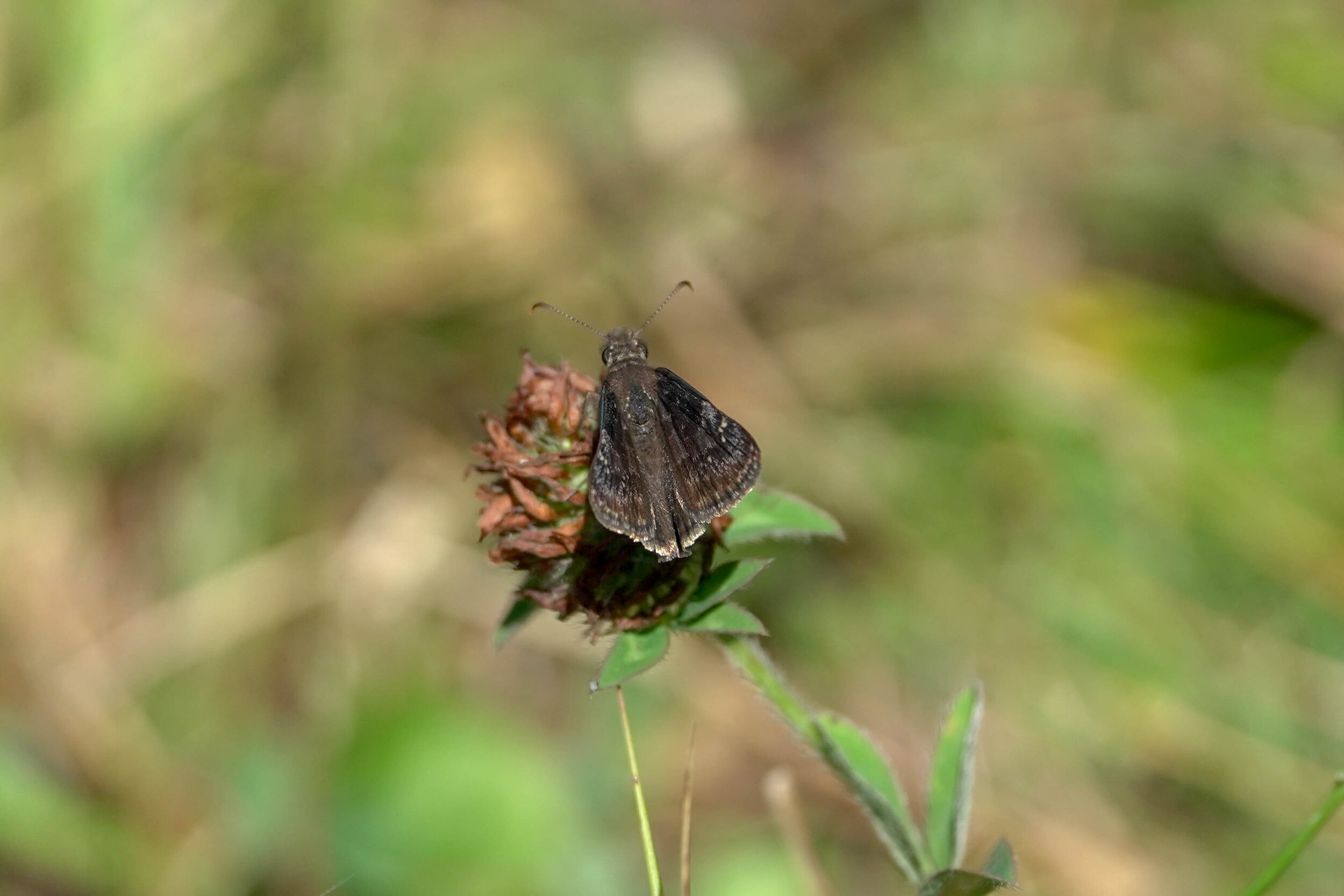 Butterfly Count-4.jpg