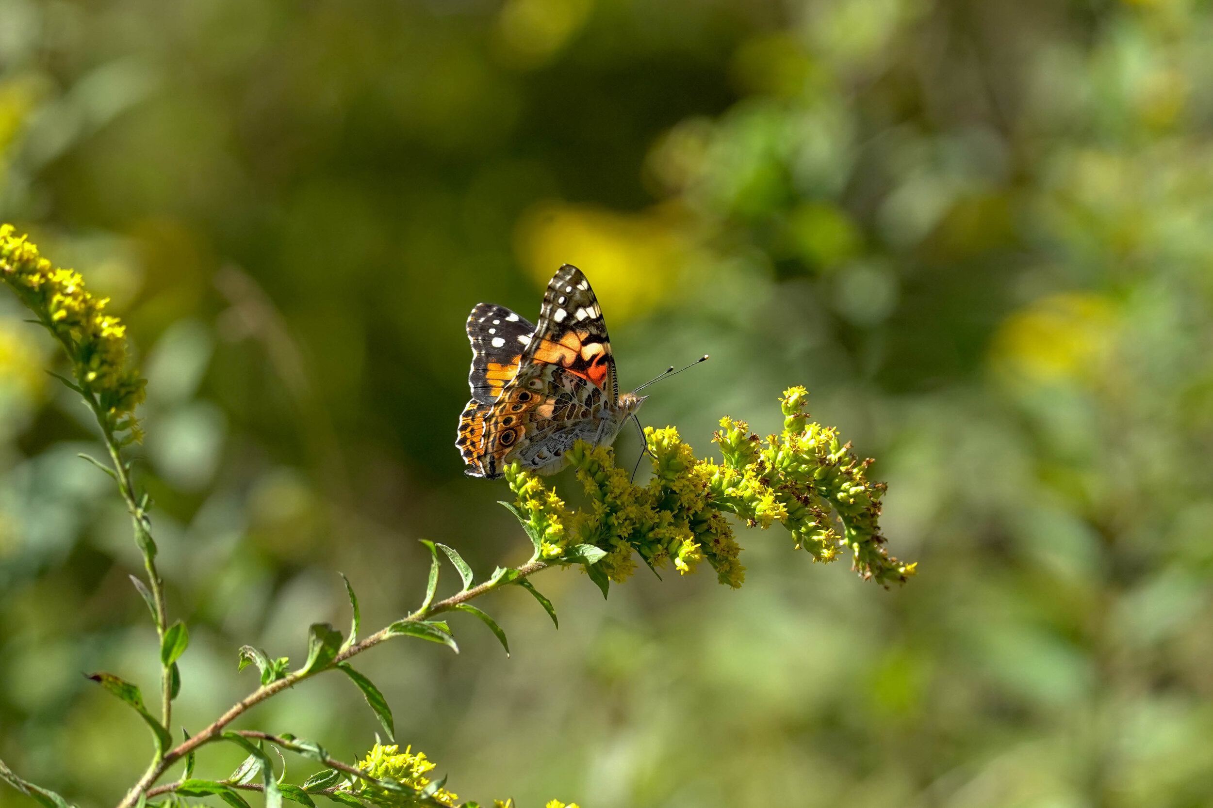Butterfly Count-6.jpg