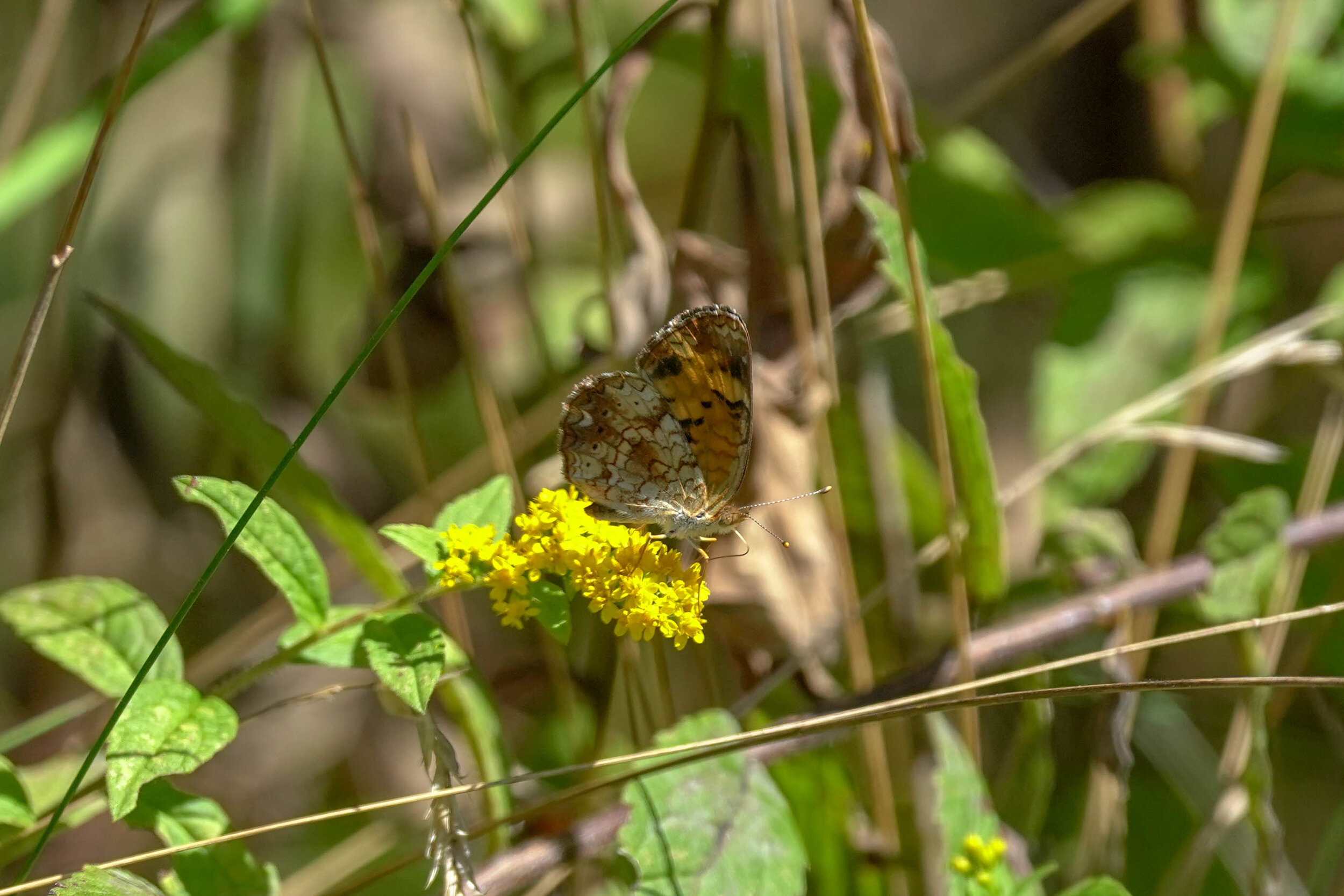 Butterfly Count-16.jpg