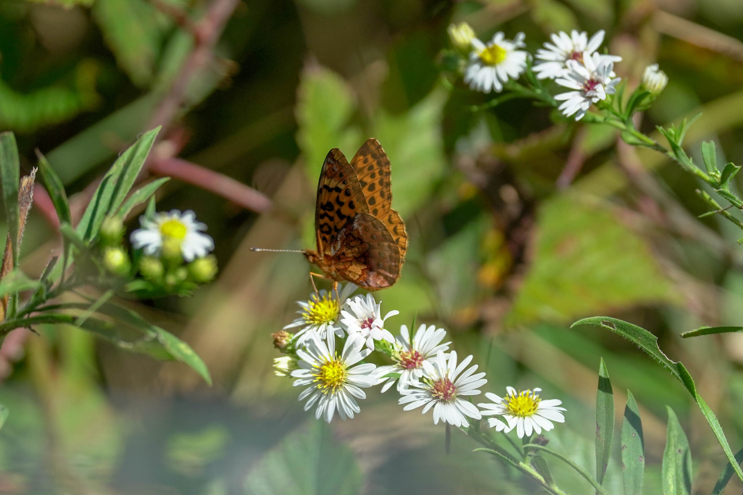 Butterfly Count-13.jpg
