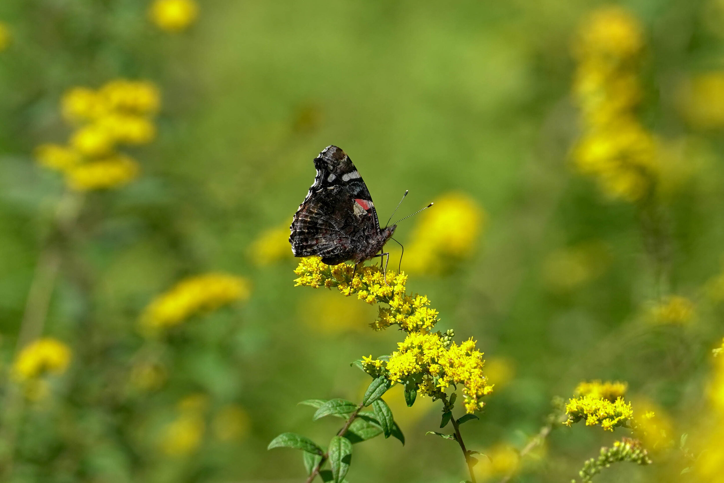 Butterfly Count-18.jpg