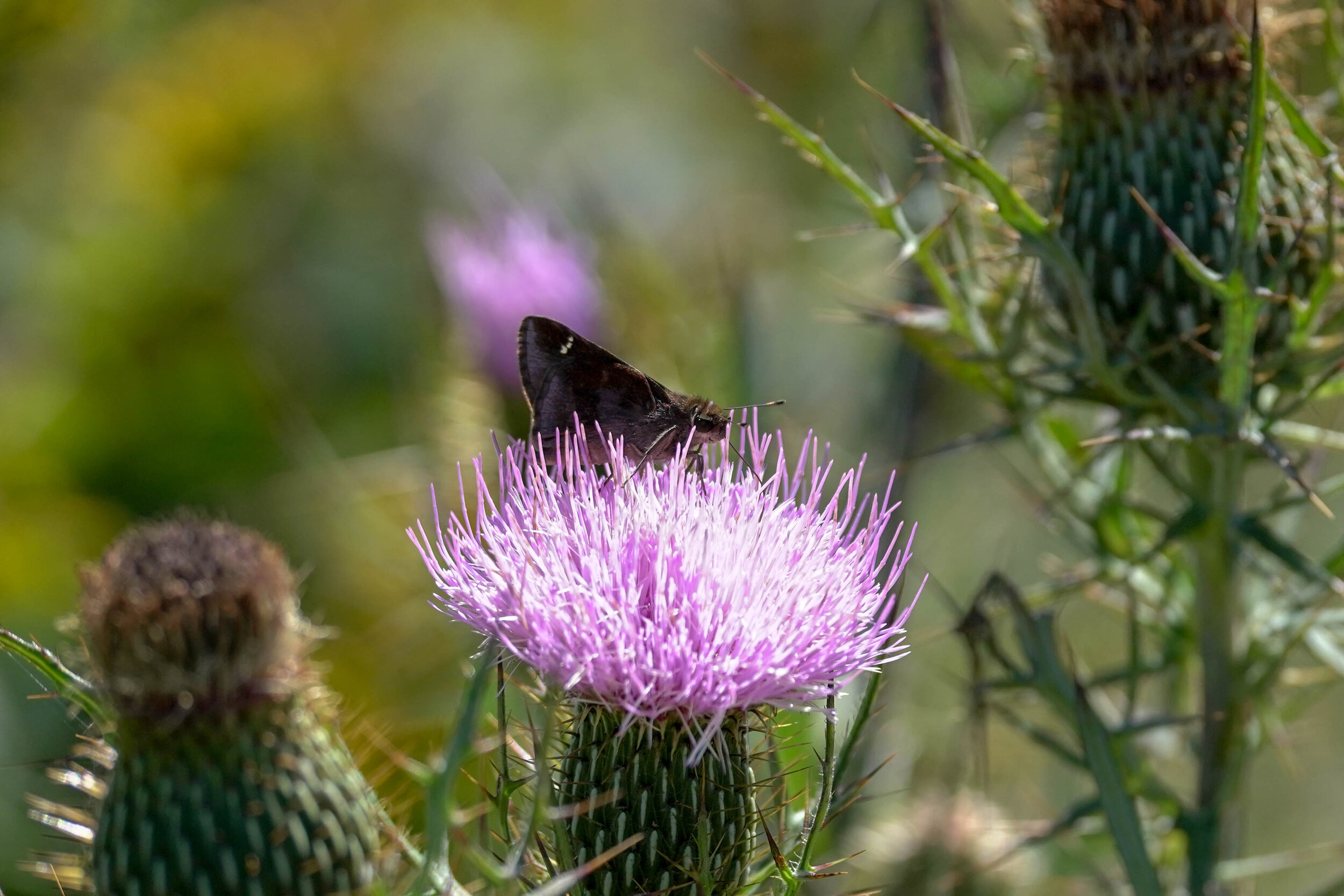 Butterfly Count-17.jpg