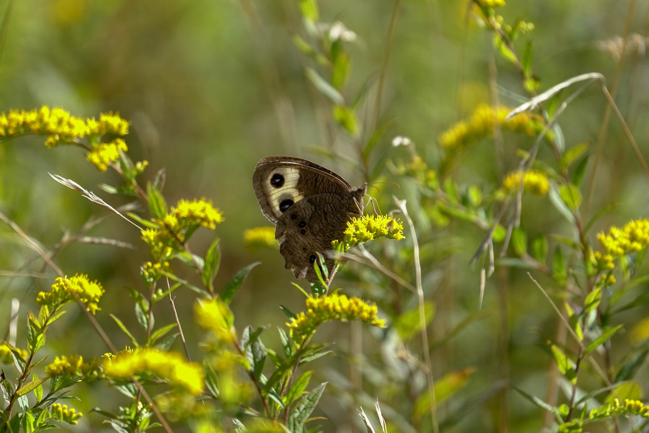 Butterfly Count-23.jpg
