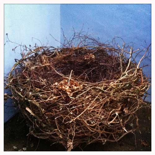 The Human Nest - photography prop