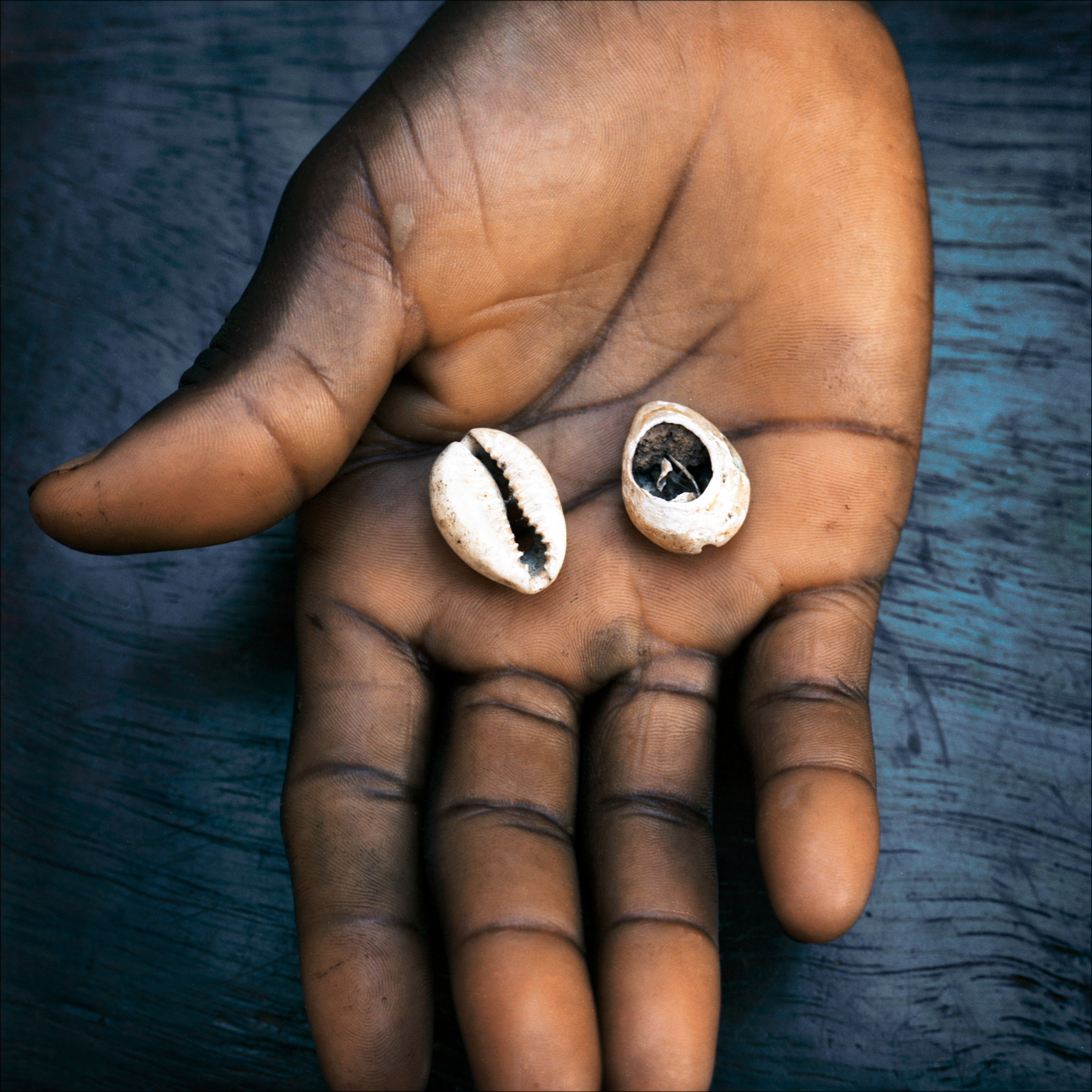 "Two cowrie shells used for divination. This configuration, one up and one down, called ""Eye Ife"" means a positive response."