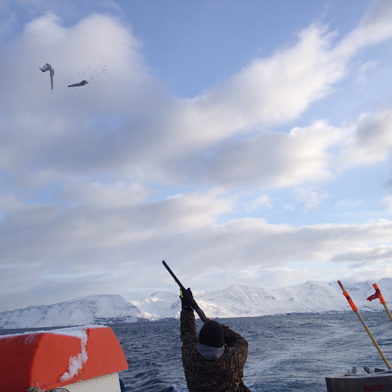 """The Freymundur ÓF-6 was heading home from a dolphin hunt, when she gained a seagull on her tail, swooping over her wake in the hope of some offcuts. Asgeir emerged in his camo, took perfect aim with a shotgun, then burst out laughing. """"He was so close, I blew his wing off!"""" Seagulls are considered a pest in Iceland, and the government pays for Asgeir's ammo. Other gulls arrived to feast on the carcass."""