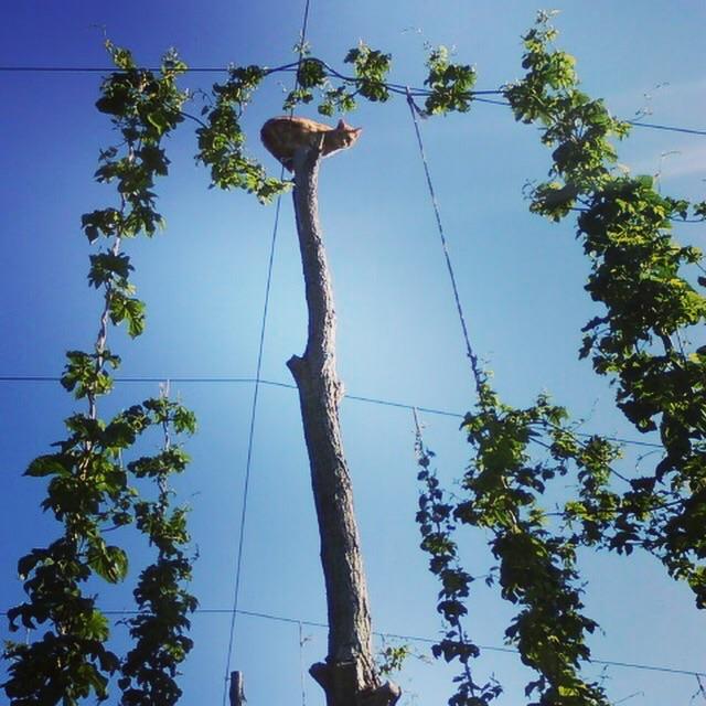 Albert atop 18 ft pole