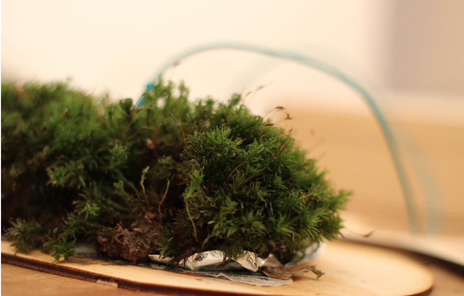 Sample of connected moss @STEFANIE WUSCHITZ