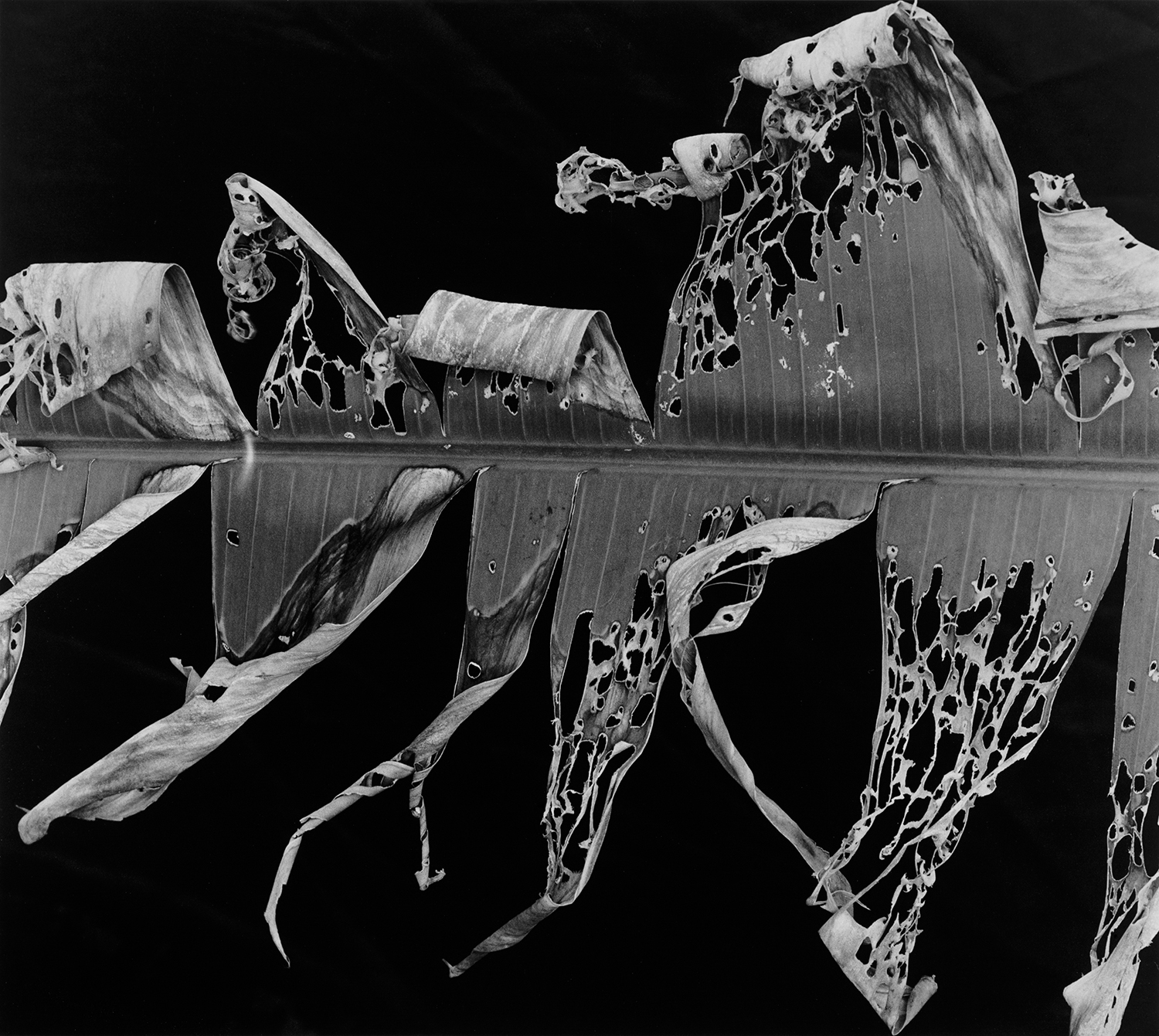 Brett Weston, Hawaii - Plate 3 - Final retouched file