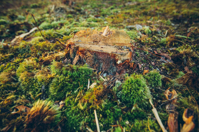 MACED_Forest047.jpg
