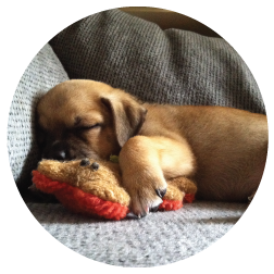 Rudie, 8 weeks. Snuggling with his bear!