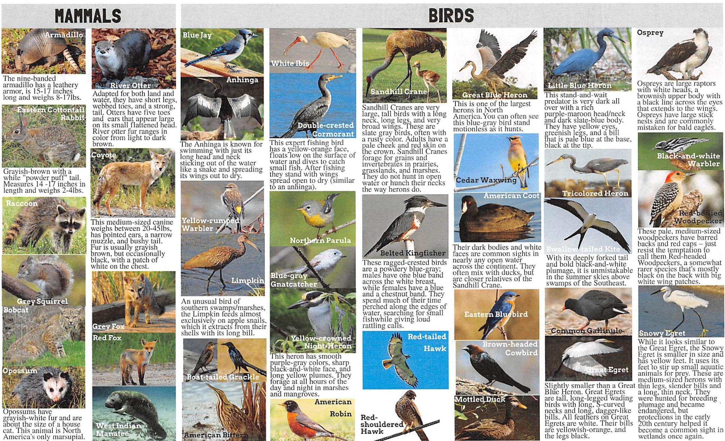 NativeSpeciesGuide-page-1.jpg