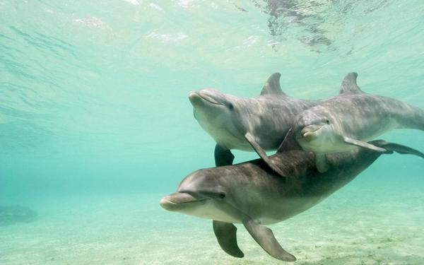Wallpaper-dolphin-sea-underwater-photo.jpg
