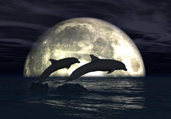 moonlight-dolphins-3d-wallpaper.jpg