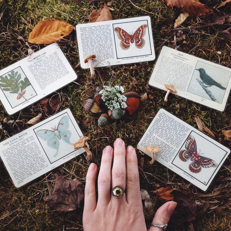 Photo  @mountaintalk  - cards  Naturephilia