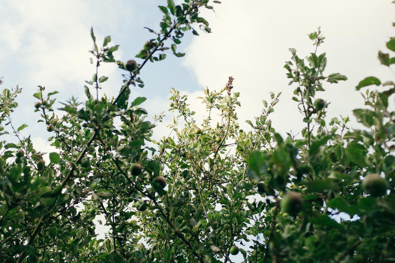 apple-picking-in-the-garden-04.jpg