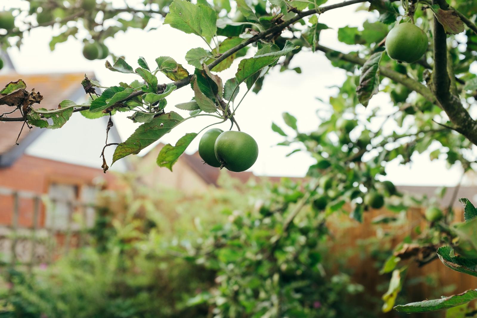 apple-picking-in-the-garden-08.jpg