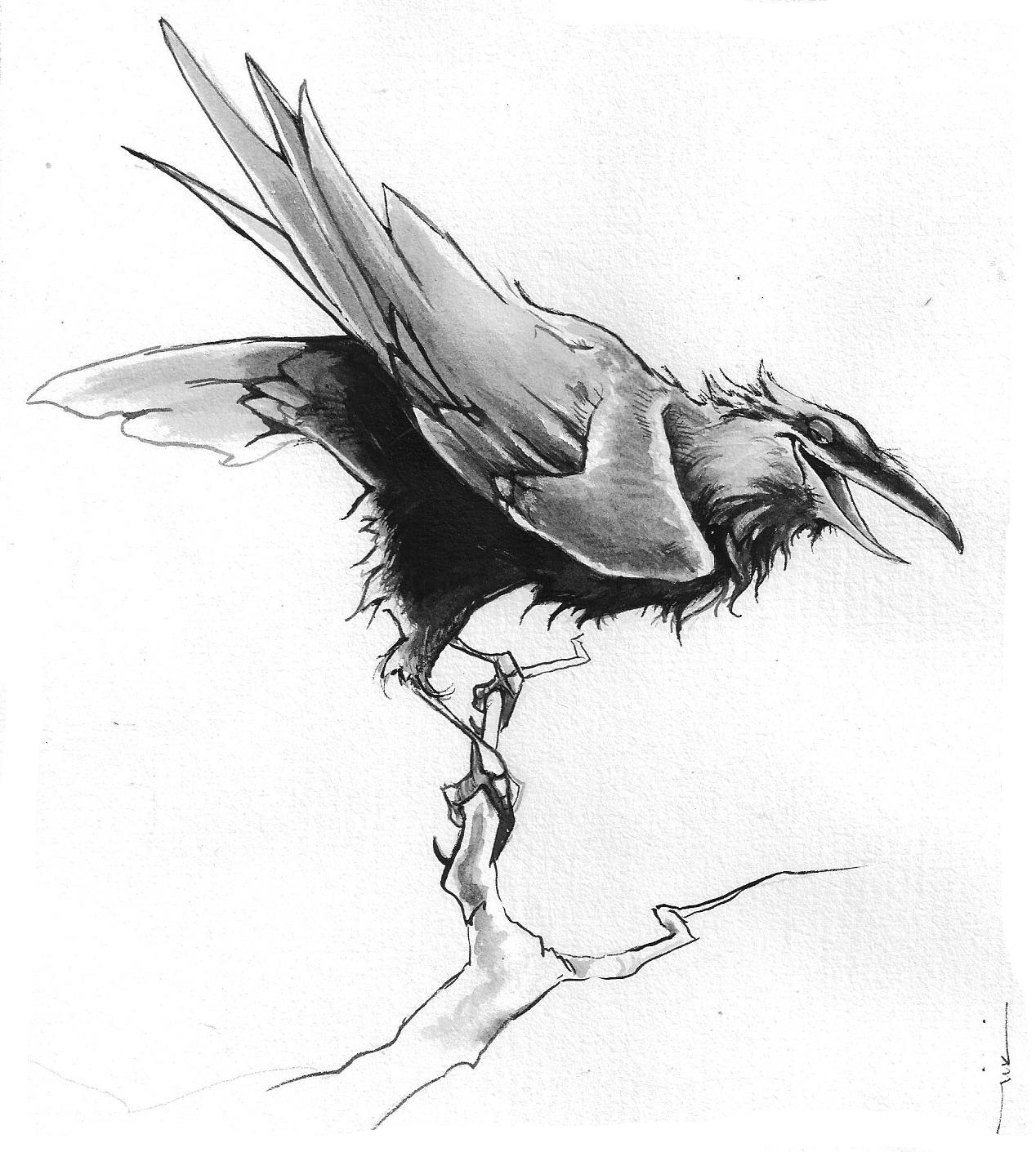 Sassy Raven1.jpg