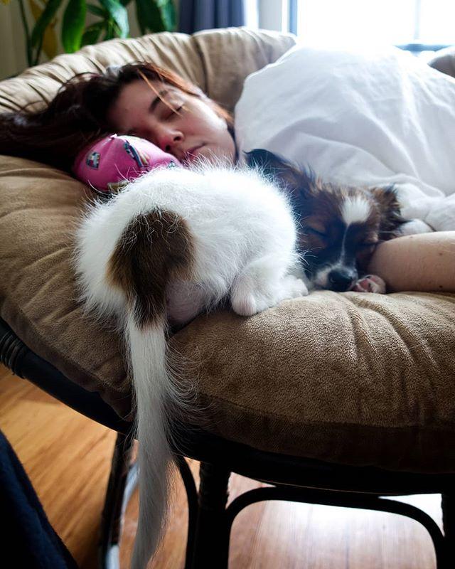 Baby freya butt :3 #lokiandfreya #papillondog