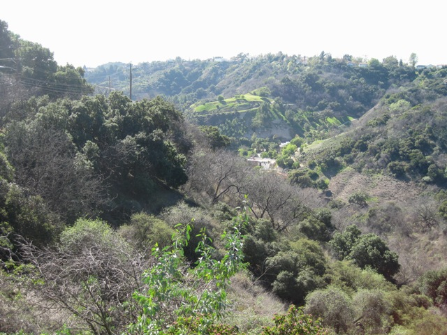 A view from the top of Benedict Canyon.