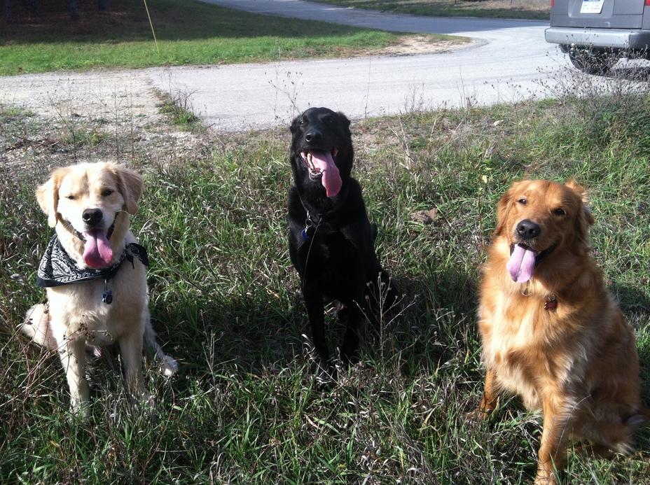 Daily dog walks with Murphy & Hudson!