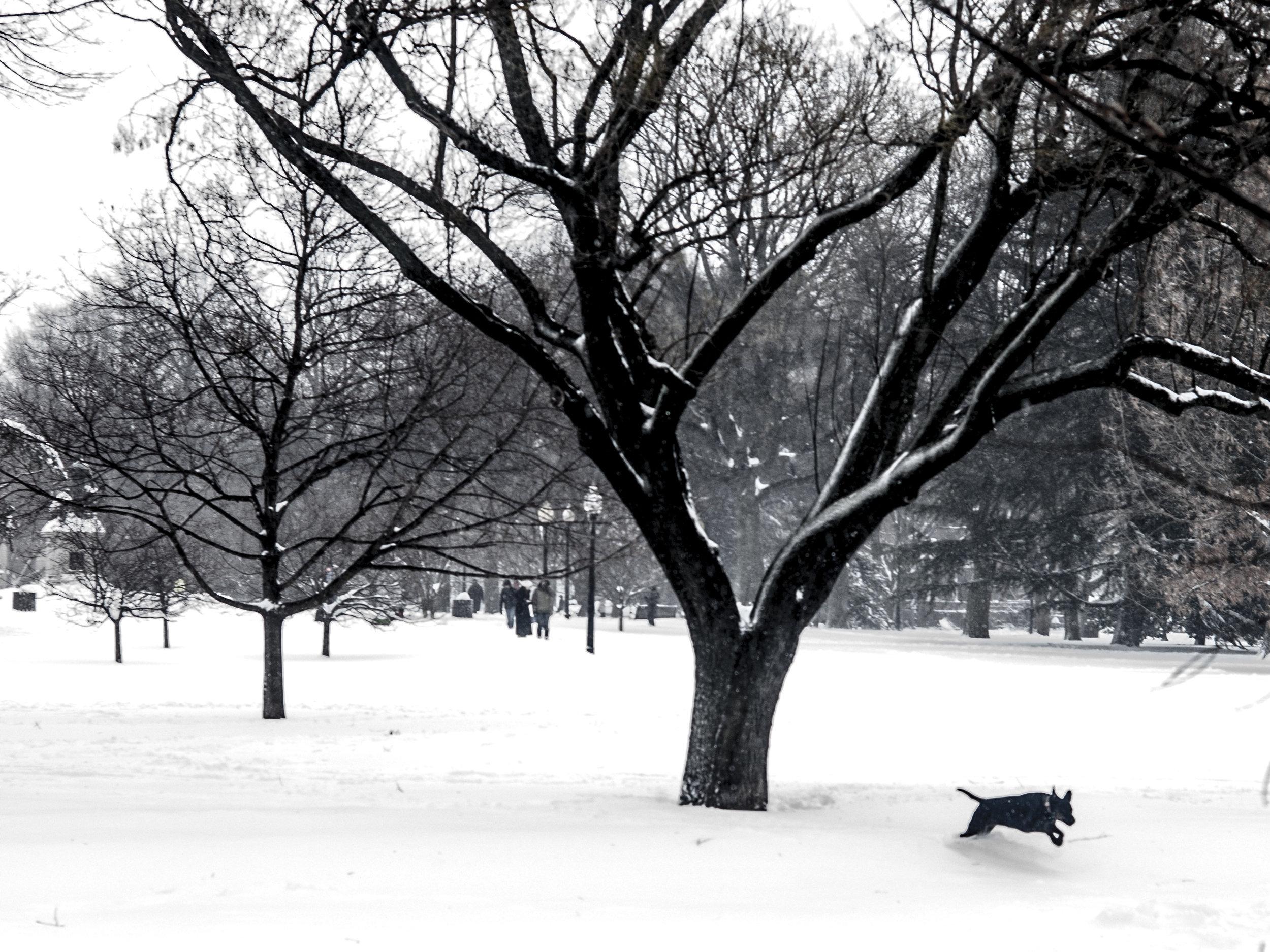 Lincoln Park Dog in Snow.jpg