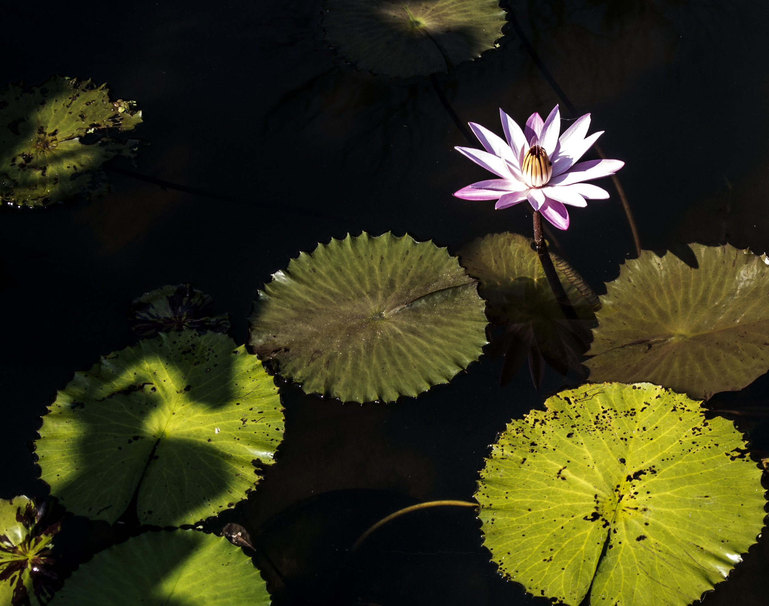 SUnshine and Lotus.jpg