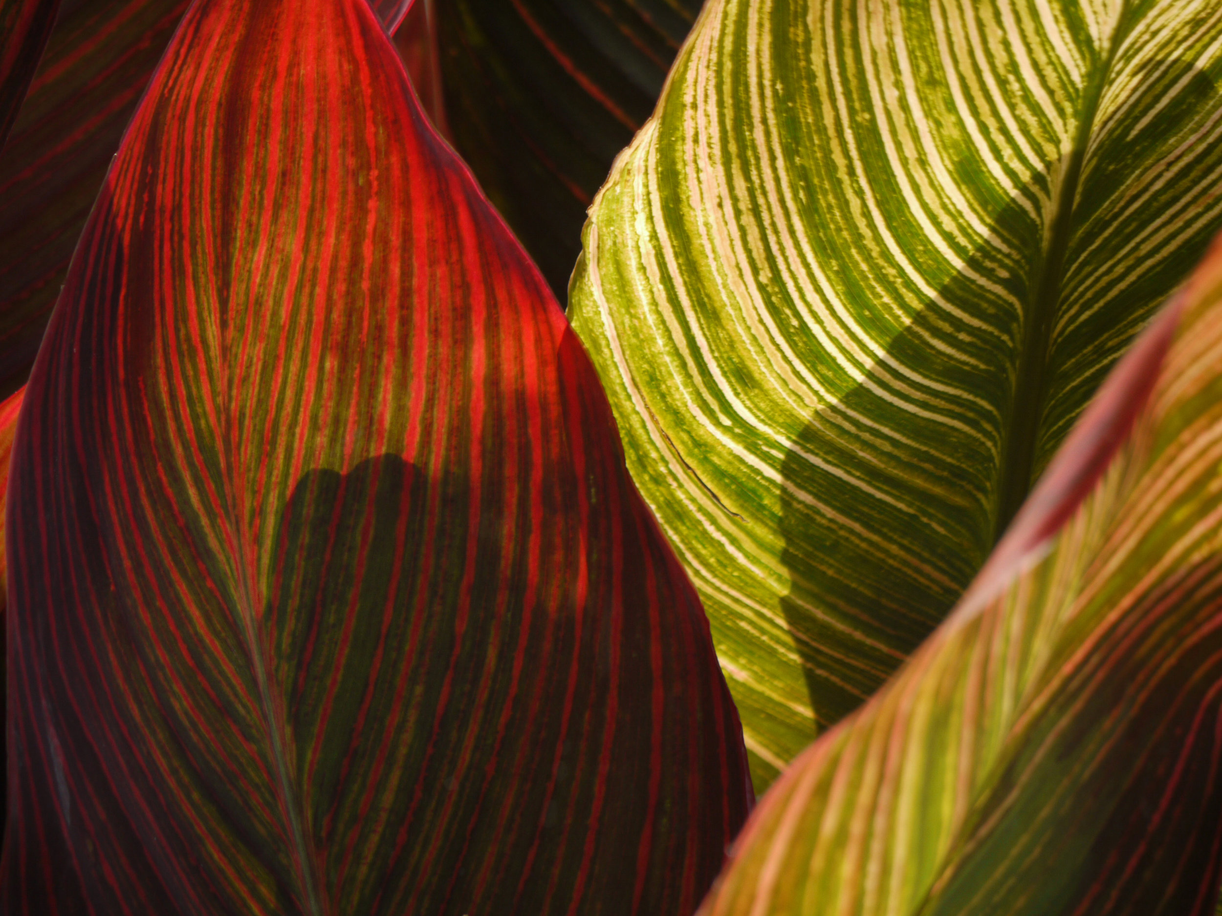 Red and Green Leaves.jpg